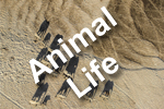 Animal Life Photography Competition